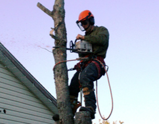 MAn in tree with a chain saw